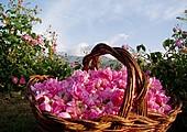 Día 8 - El Valle de las Rosas
